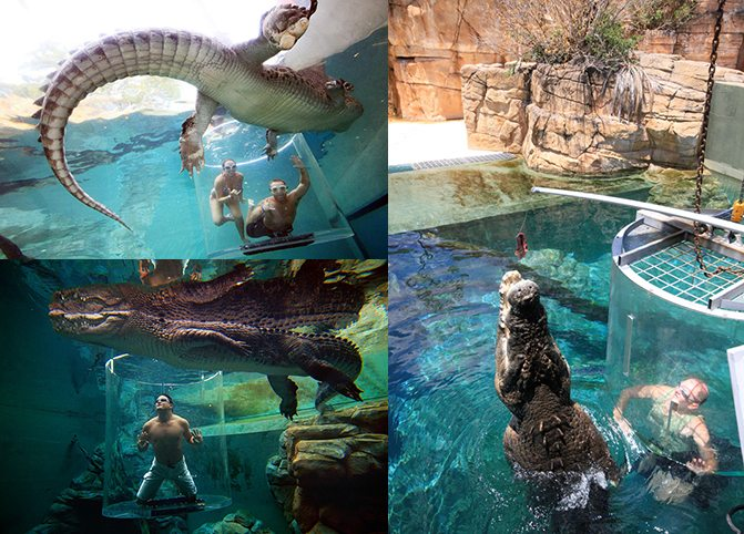 Crocosaurus Cove - BilderCollage